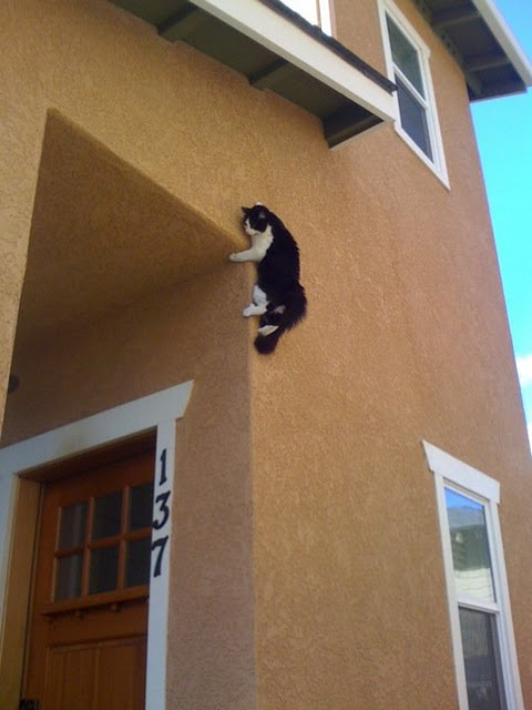 Cat on a ninja mission