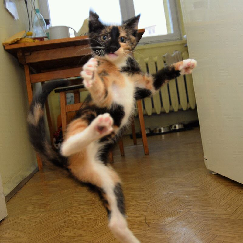 Cat kung fu fighting