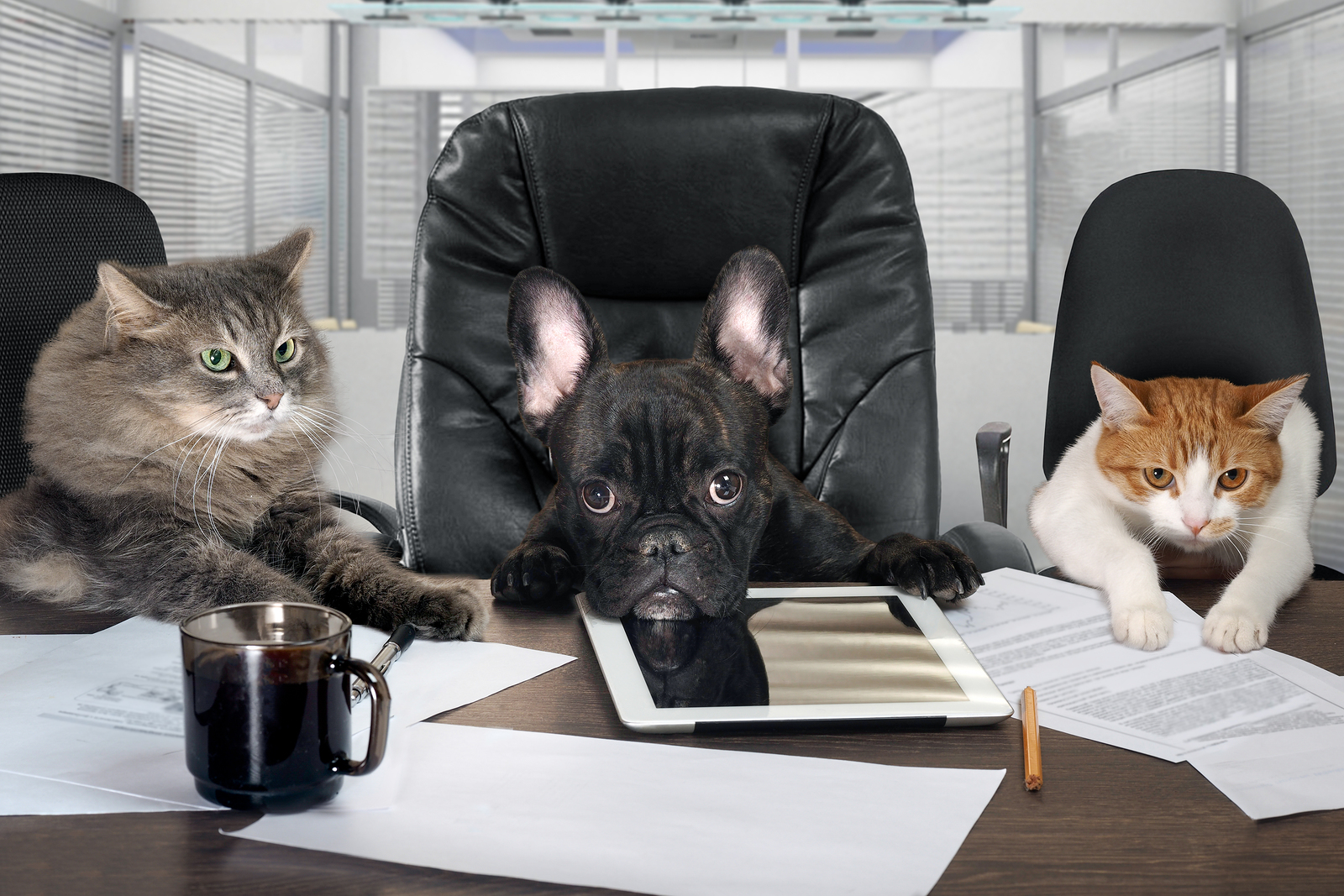 Dog as the head and cats as employees managers in an office