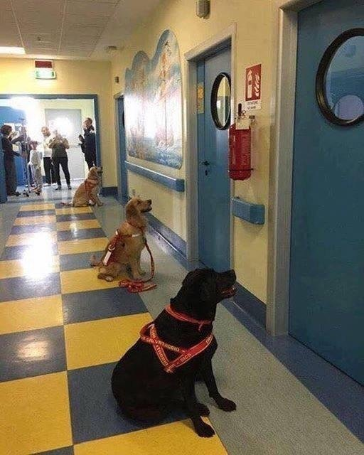 Therapeutic dogs waiting