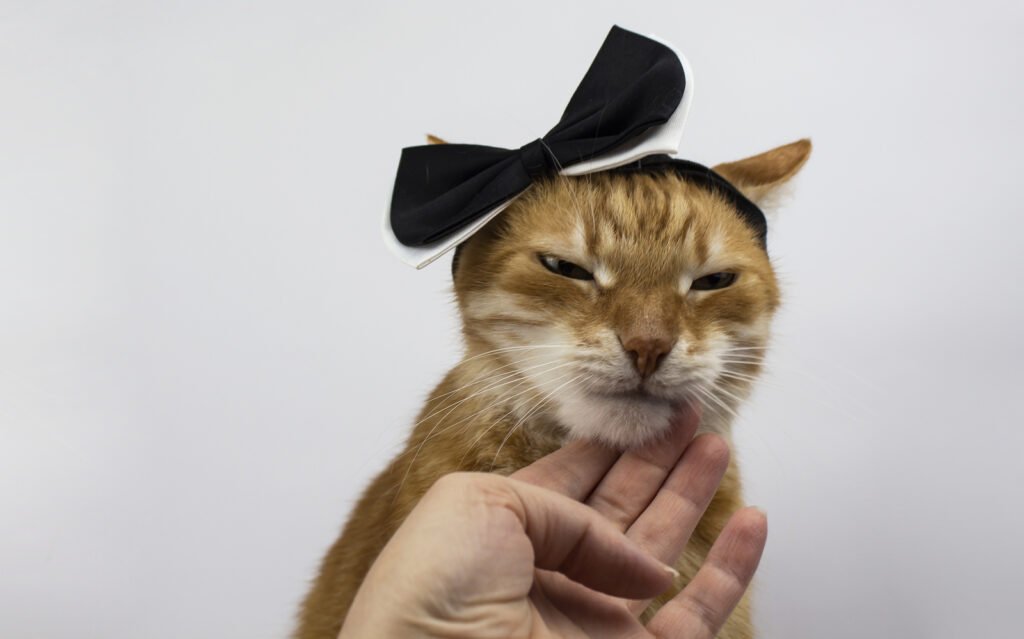 Annoyed Cat with ribbon on head